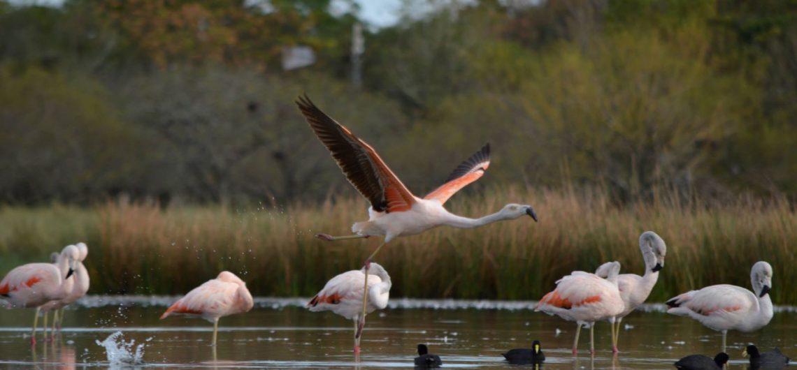Est-ce plutôt parce que la date du 14 février correspond au début de laccouplement des oiseaux que la légende a pris forme ?